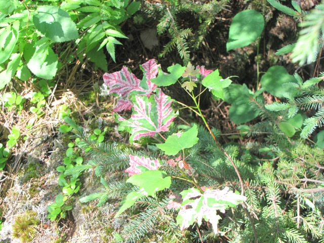 a plant on noth hegman